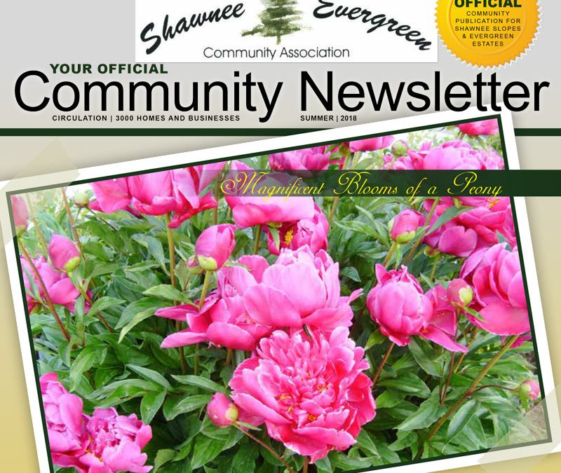 SECA Summer 2018 Newsletter